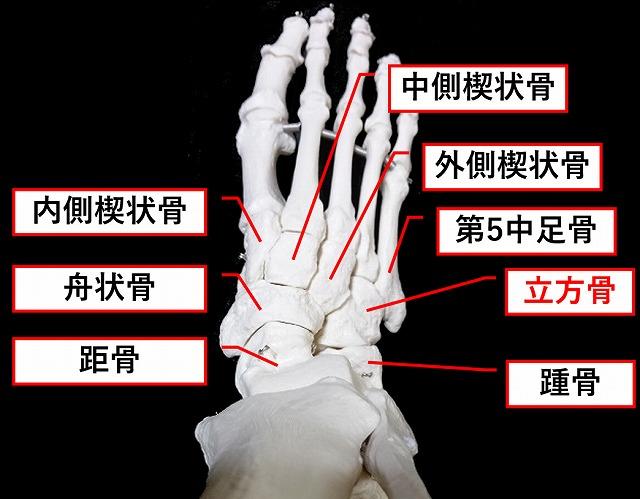 内側 楔状 骨